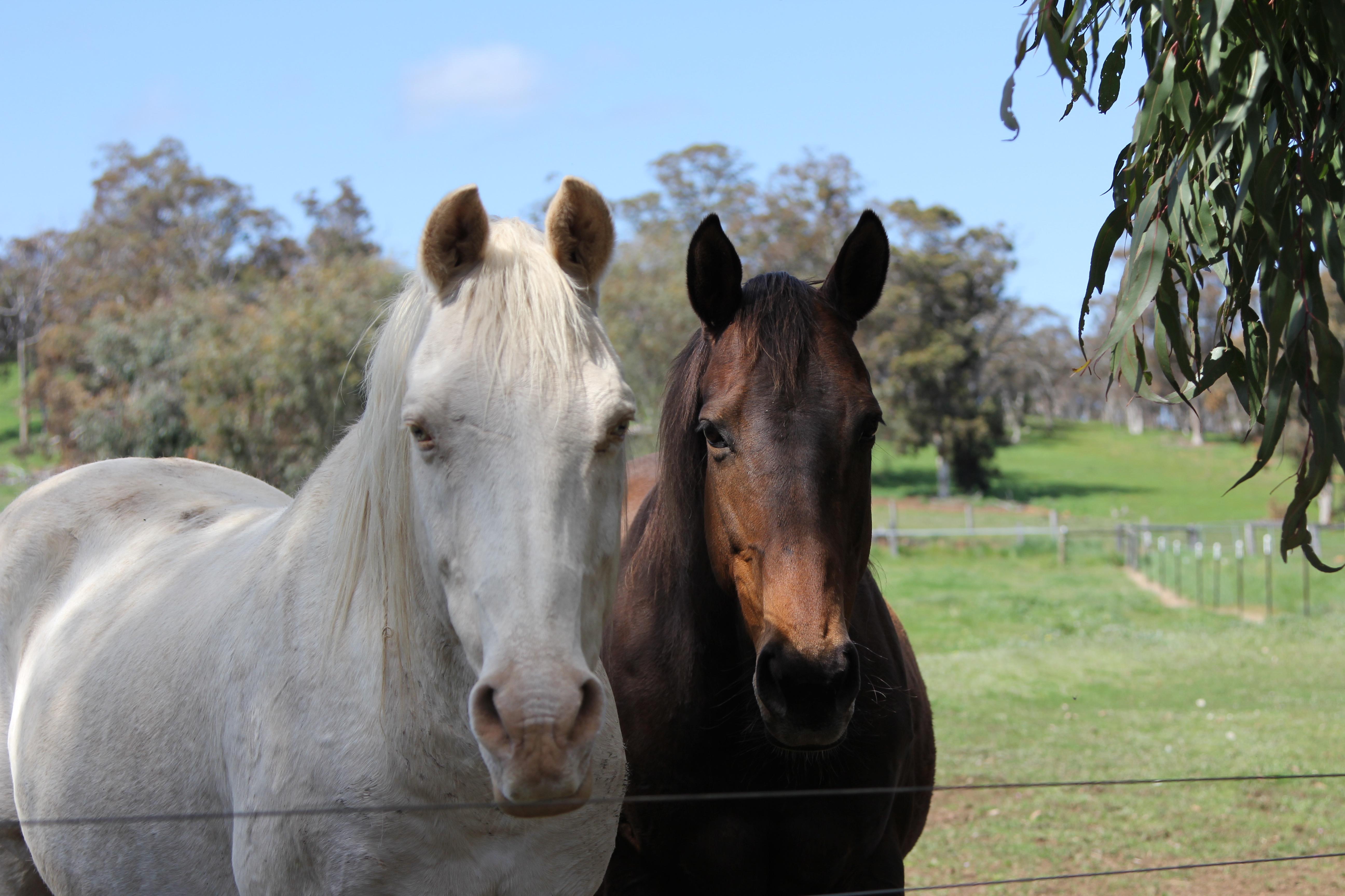 Springdale Solitaire & Jazleenha