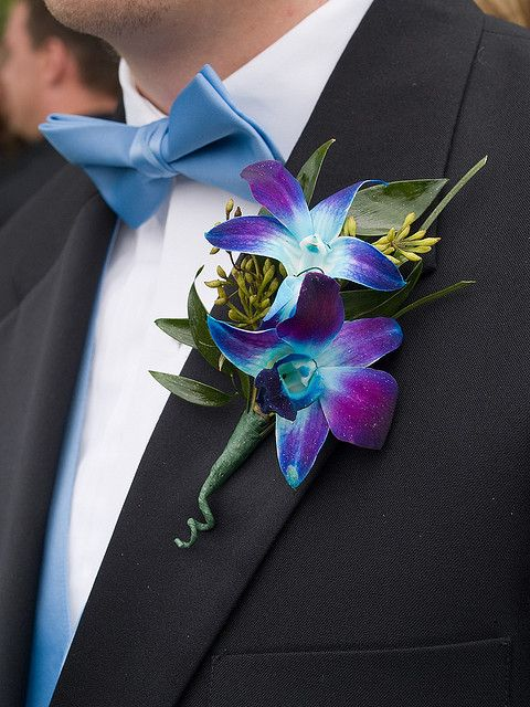two blue singapore orchids boutonniere