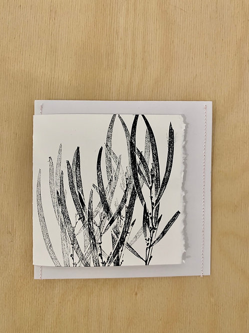 Gift Card - Nature series -  Acacia in Winter