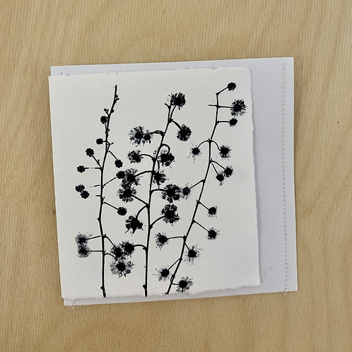 Gift Card - Nature series -   Wattle Buds