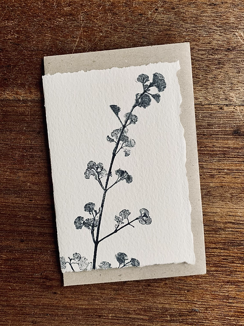 Small Gift Card - Nature series -  Native Mint Bush