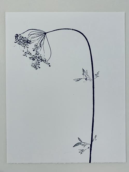 Parsley Flower III