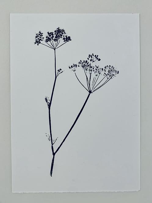 Parsley Flower V