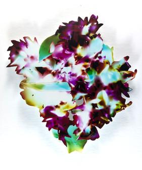 Posie (dahlia, lily)