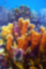 Classes Scuba Bruce Diving.jpg