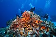 About Scuba Bruce Diving.jpg