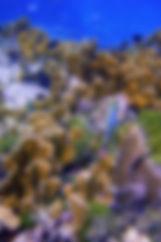 Scuba Bruce Diving Blogs.jpg