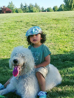 F1 Labradoodle Therapy Dog