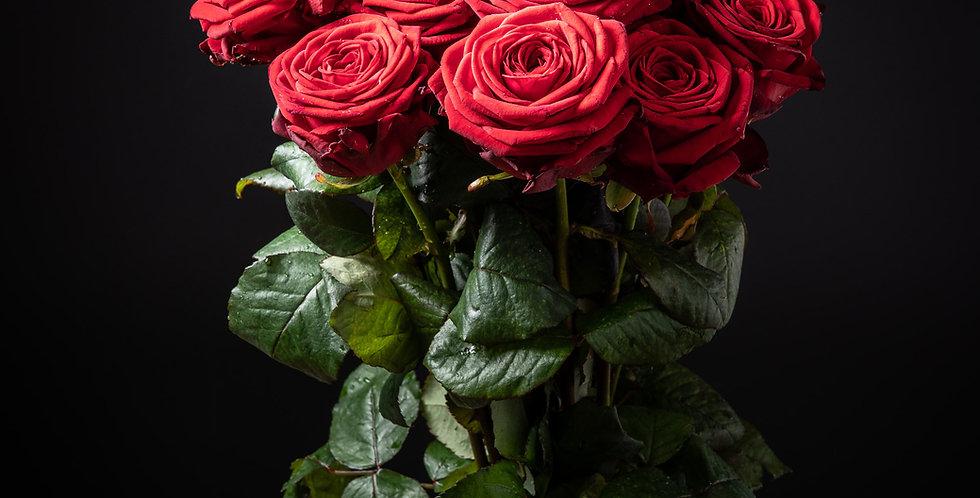 15 rote lange Rosen