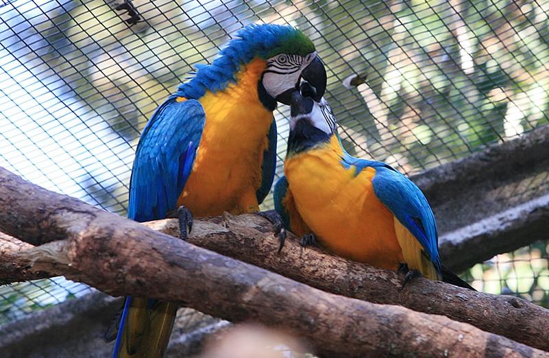 parque_das_aves_25