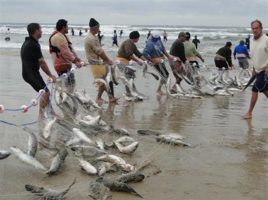 pescadores-animados-com-a-safra-da-tainh