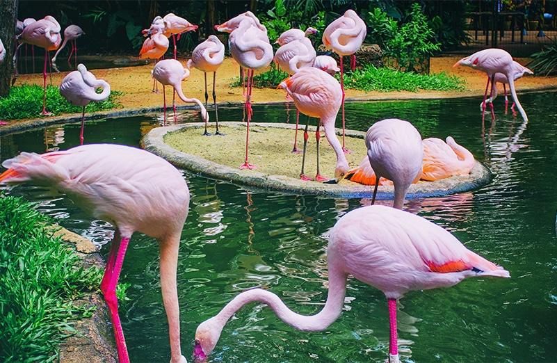 parque_das_aves_12