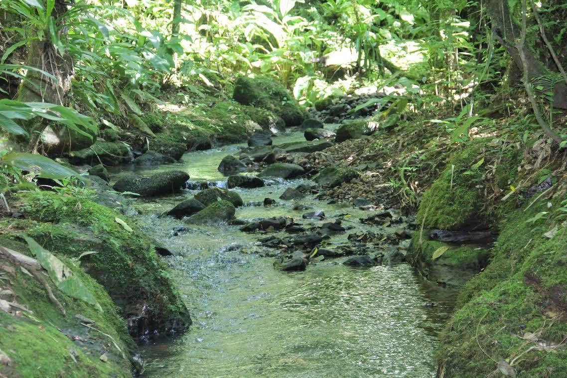 bacia do rio Urussanga - localidade de R