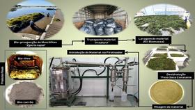 Arena Expo: Uso de plantas aquáticas para produção de biocombustível