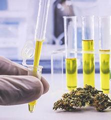 Lab-testing-of-CBD-cannabis_220x238_7659