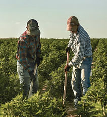 CW-farmers-220x245.jpg