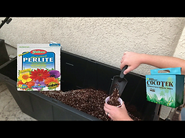 filling cups with coco and perlite