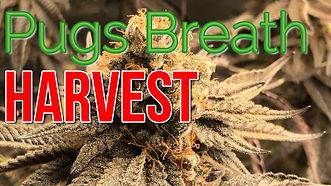 Half Pound Harvest.jpg