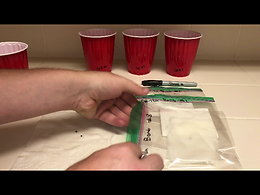 placing wet paper towel and seed in Ziploc