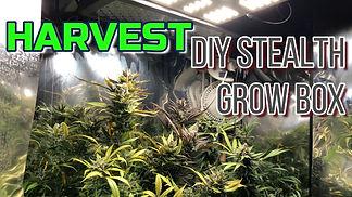 DIY Stealth Grow Box Harvest thumbnail.j