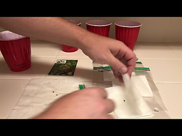 placing cannabis seed in paper towel or geminating