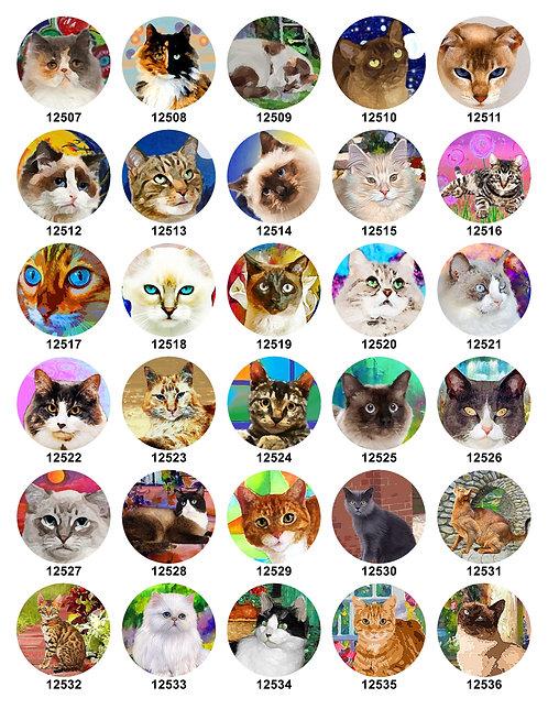 Cats 12507-12536
