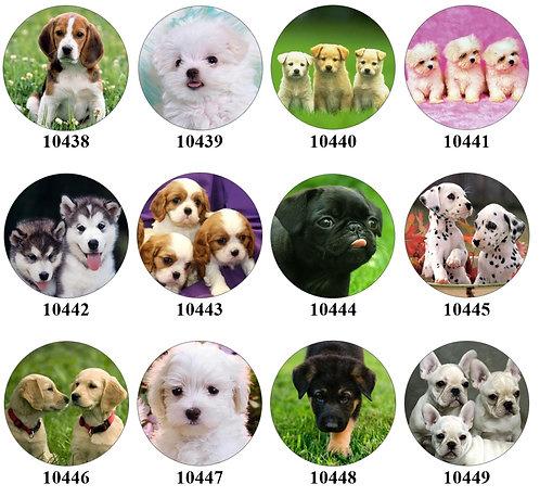 Puppies - 10438-10449
