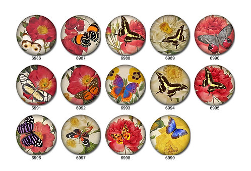 Butterfly Collection 5