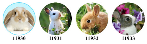 Baby Bunnies 11930-11933
