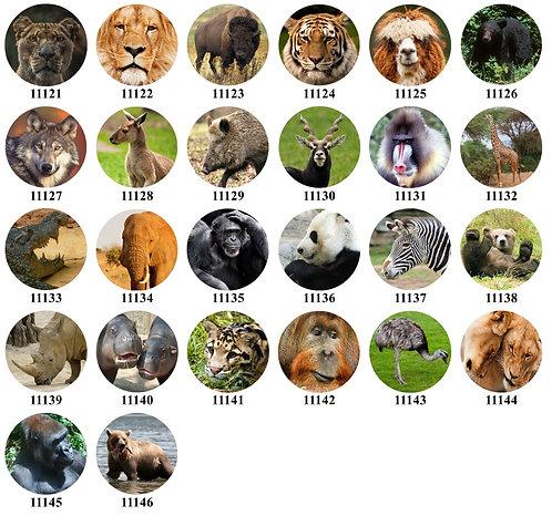 Wild Animals 11121-11146