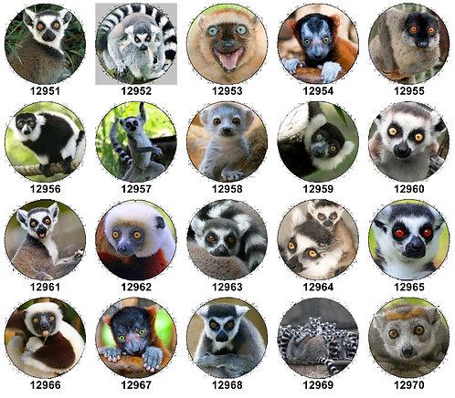 Lemurs 12951-12970