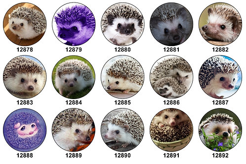 Hedgehogs 12878-12892