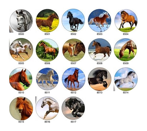 Horse Collection 1