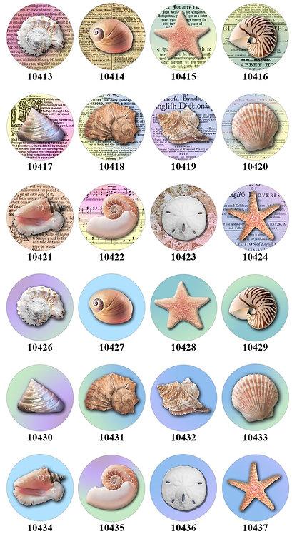 Sea Shells - 10413-10437