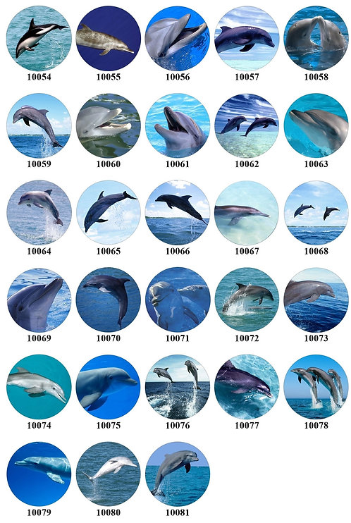 Dolphins - 10054-10081