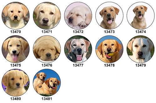 Yellow Lab 13470-13481