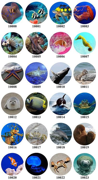 Ocean Animals -10000-10023