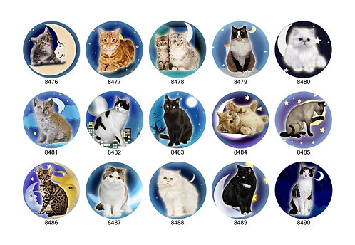 Moonlight Cat Collection