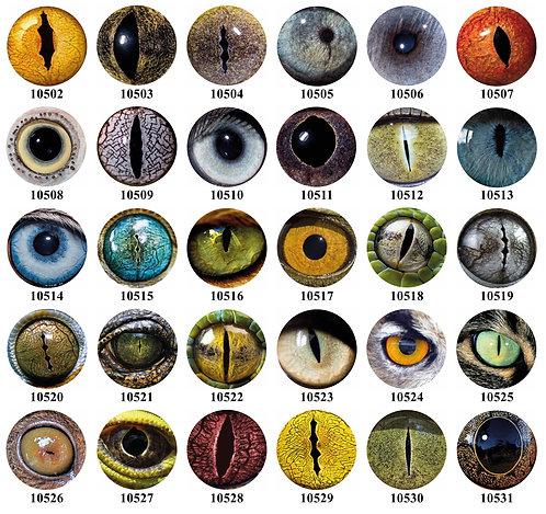 Animal Eyes 10502-10531