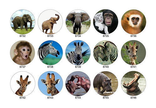 Safari Animal Collection