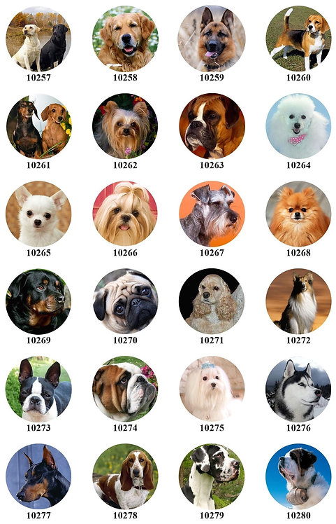 Dogs - 10257-10280