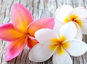frangipani-blossom_2_2.webp
