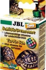 Soleil pour tortues terrestres