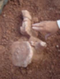 descubrimiento de malarguesaurus.JPG