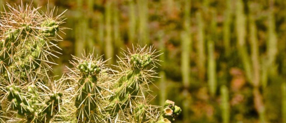 AZ Flower IMG_0927.jpg
