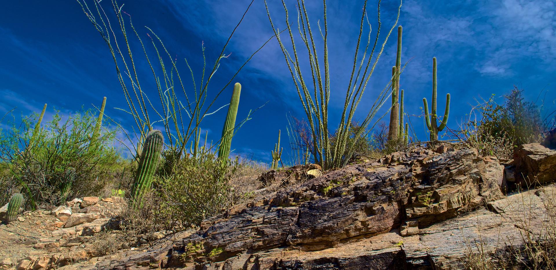AZ Trail DSC_3627.jpg