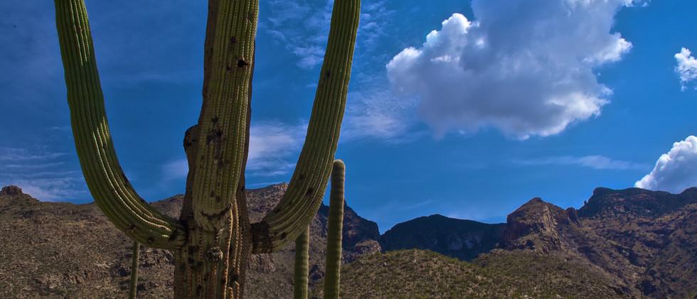 AZ Weatherman DSC_3662.jpg