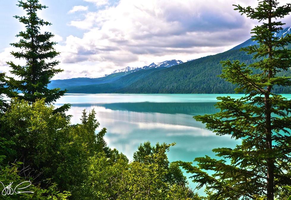 Kenai Lake Pines  DSC_0454.jpg