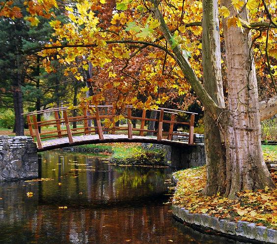 Фотообои. Фрески. Картины. Деревянный мост. Осенний парк. Природа. Пейзаж