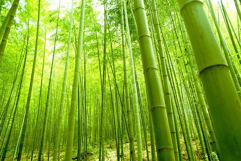 Бамбуковый лес в естественном зеленом фоне